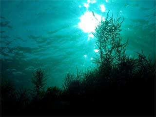 トゲモク(伊豆海洋公園)