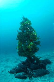 クリスマスツリー(伊豆海洋公園)