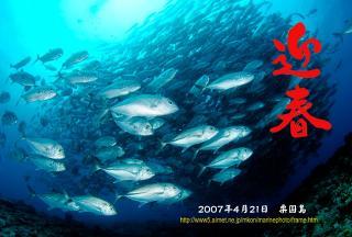 ギンガメアジ(粟国島)