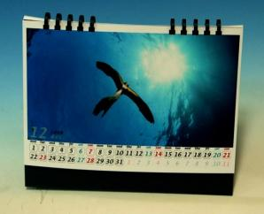 自作「水中写真カレンダー」