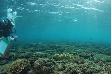ミドリイシサンゴ(砂辺)