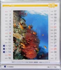八重山ダイビング協会カレンダー