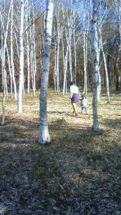 朝、しらかば林を散歩しました