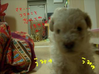 DSCN2836_convert_20090702210159.jpg