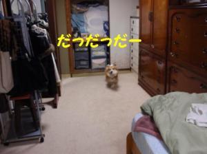 20091129a.jpg
