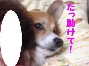 PA290360.jpg