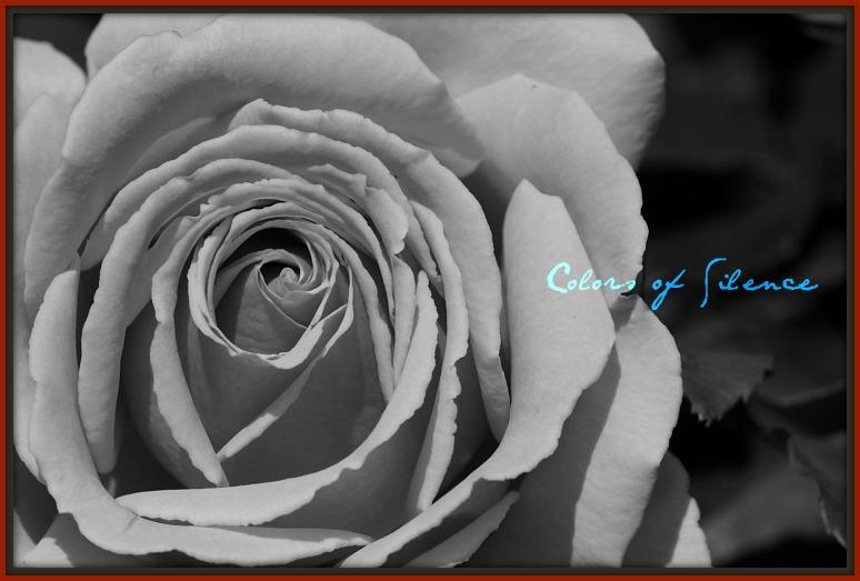 Non24-rose.jpg