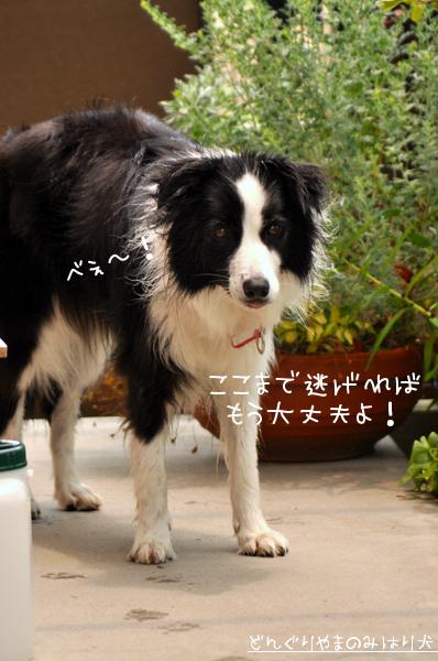 0907mizu20.jpg