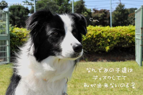 DSC_0017_20090629004922.jpg