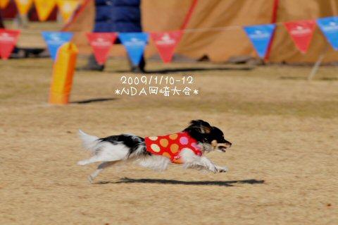 DSC_3243.jpg