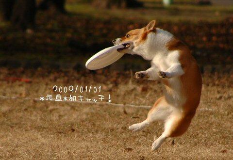 DSC_4598.jpg