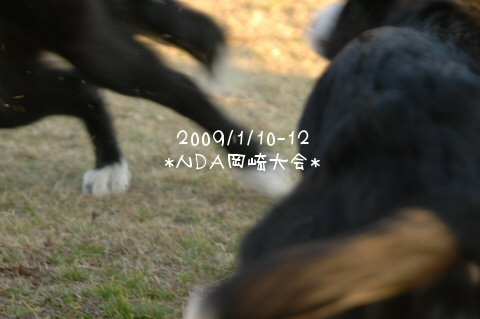 DSC_4993.jpg