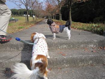 みんなでお散歩!!