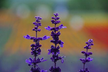 090719-22flower.jpg