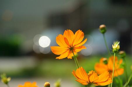 090829-09flower.jpg