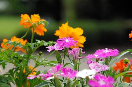 091012-13flower3.jpg