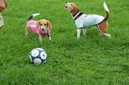090712-14chokobel soccer