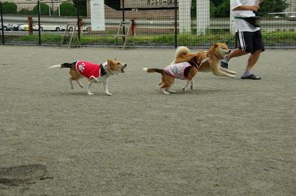 090718-7choko,charashiba run