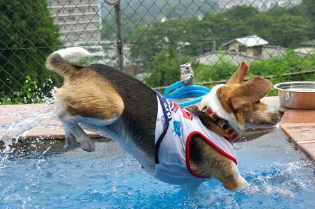 090822-01choko in pool