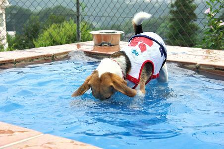 090822-09choko in pool2
