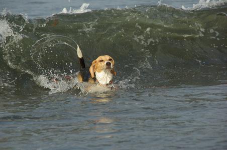 090823-07choko on wave
