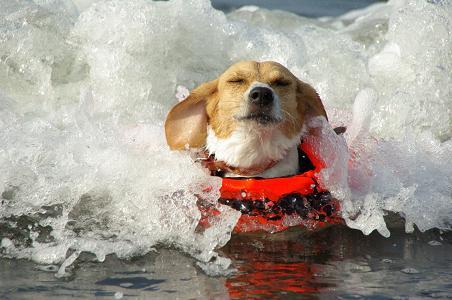 090823-16choko swimming