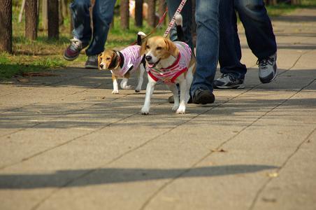 091031-07sumomochoko walking