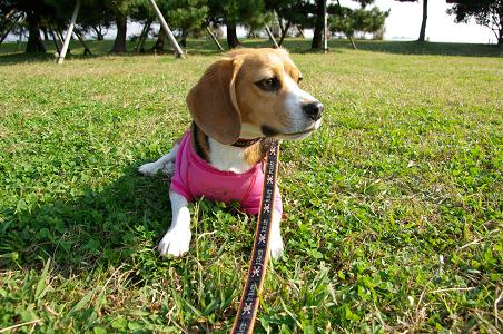 091107-26chara on grass
