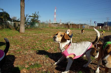 091220-17choko toy run