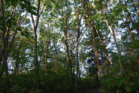 休暇村の森