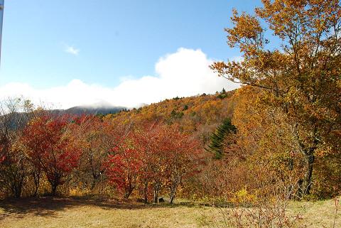 面ノ木園地の紅葉は美しい