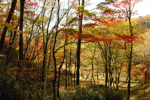 紅葉の美しさ2