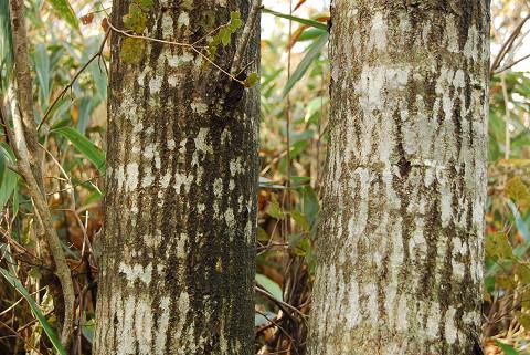 茶色の落ち葉の幹