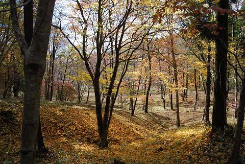 紅葉の面ノ木1