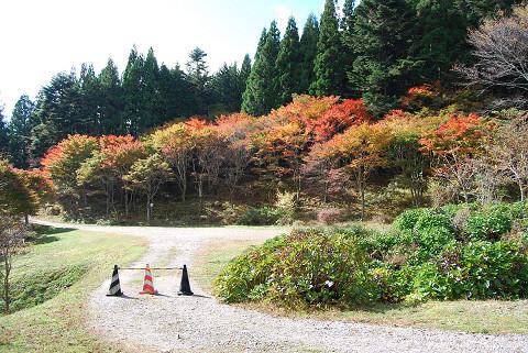 紅葉の面ノ木2