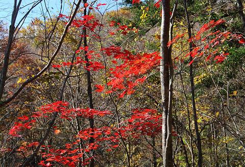 紅葉の面ノ木3