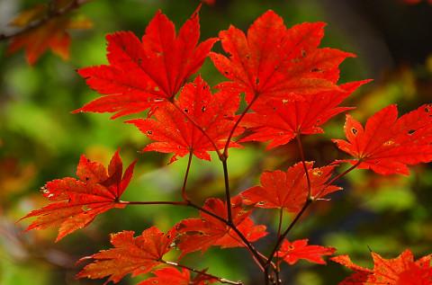 紅葉の面ノ木4