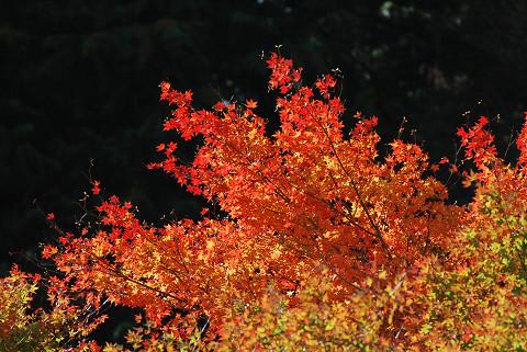 紅葉の面ノ木5