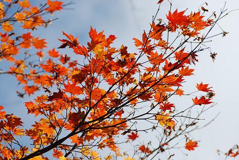 紅葉の面ノ木6
