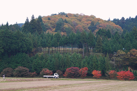 紅葉が深まったイロハモミジ