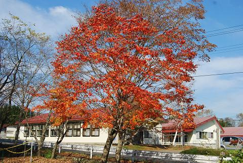 開拓記念館の紅葉