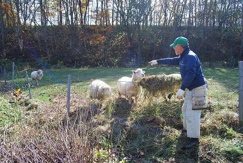 羊を飼う牧師