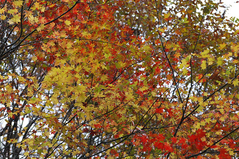 見事な紅葉のグラデーション