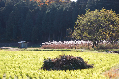 逆光の田園風景