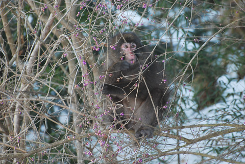 サルが庭に2