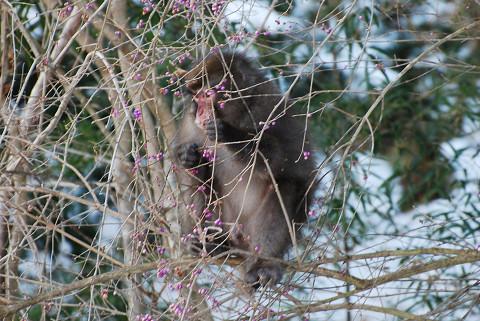 サルが庭に5
