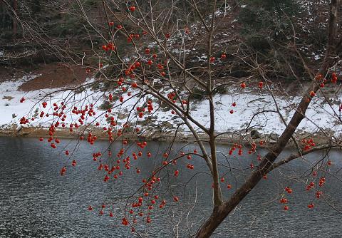 三河湖にカキ1
