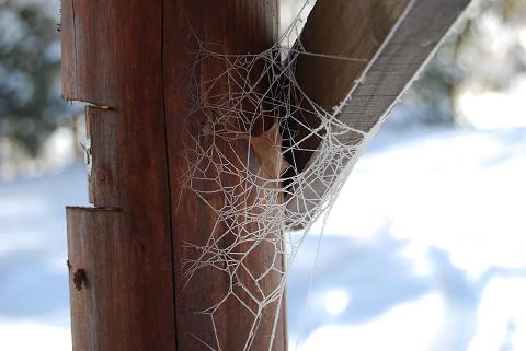 凍りついたクモの巣