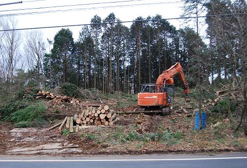 森林伐採の現場