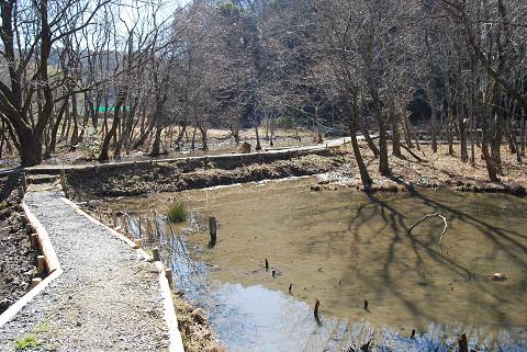 自然体験の森の湿地風景